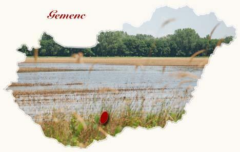 Gemenc szállás a Gemenci erdő közelében, itt található a Gemenci kisvasút is. Olcsó vendégház Gemencen, szállások Gemenci erdő